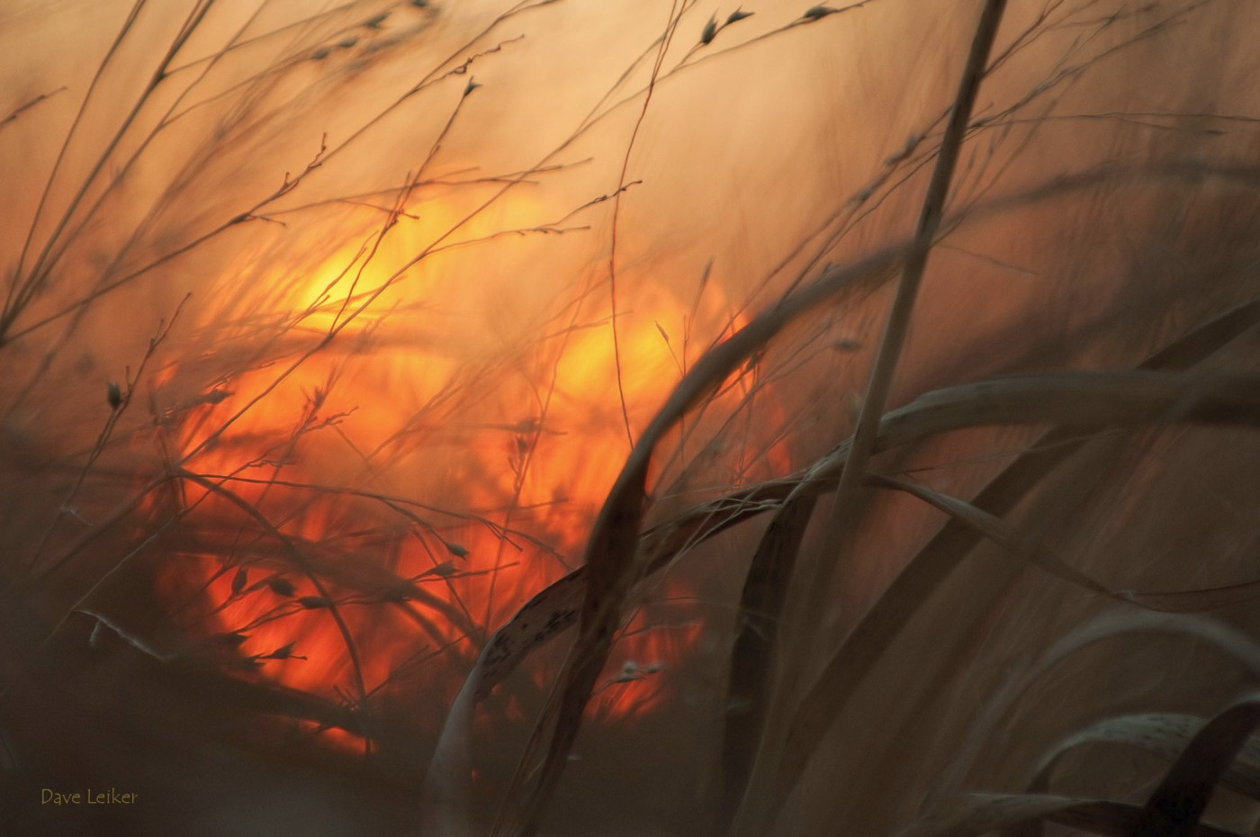 Sun setting behind wild grasses